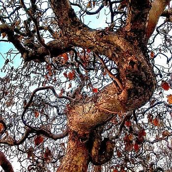 Tree In Mommas Yard 2 by Dustin Soph