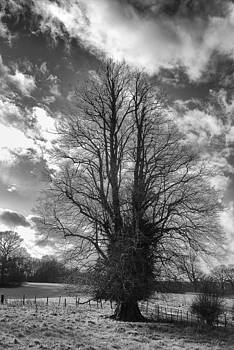 Tree In Silhouette by David Durham
