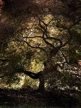 Tree in Silhouette by Ed Cooper