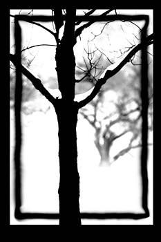 Tree in Silhouette by Paul  Simpson
