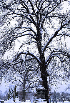 Tree in Snow 2012 by Kelly E Schultz