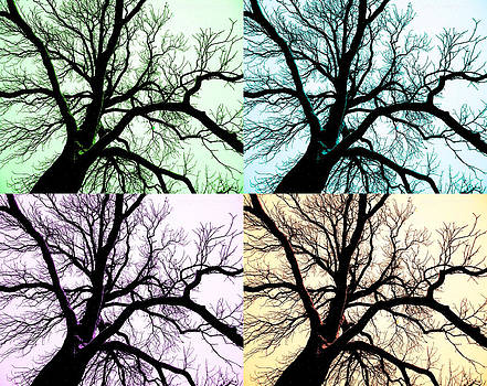 Tree in Snow Collage by Kelly E Schultz