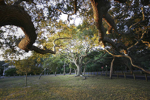 Tree In St. Augustine Park by Jessica Snyder