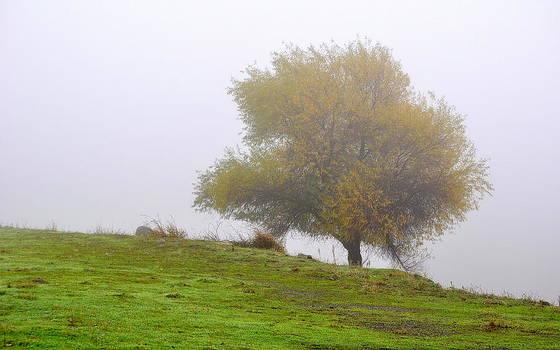 Tree in the Fog by AJ  Schibig