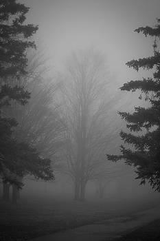 Tree in the Fog by Jim Koniar