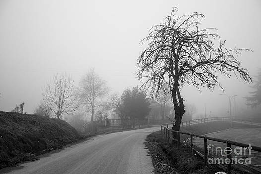 Tree In The Fog by Stefano Piccini