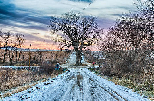 Tree in the Middle of the Road by Christopher L Nelson