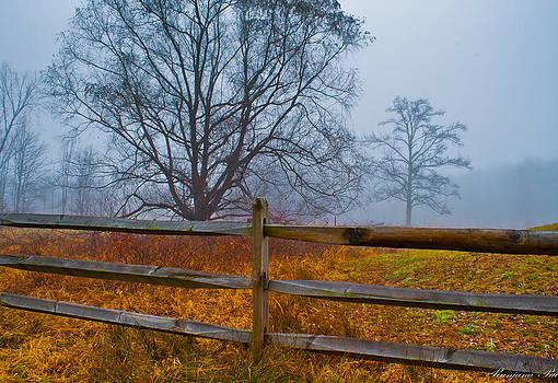 Tree in the mist by Ranjana Pai