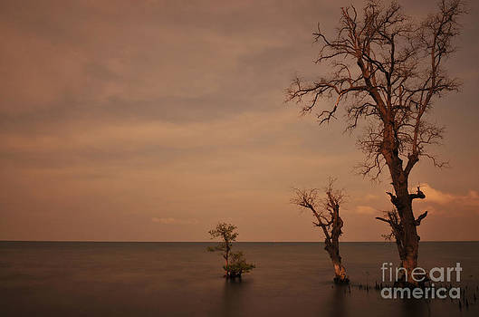 Tree in the shoreside by Wayan Suantara