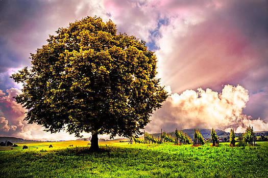 Debra and Dave Vanderlaan - Tree in the Vineyard