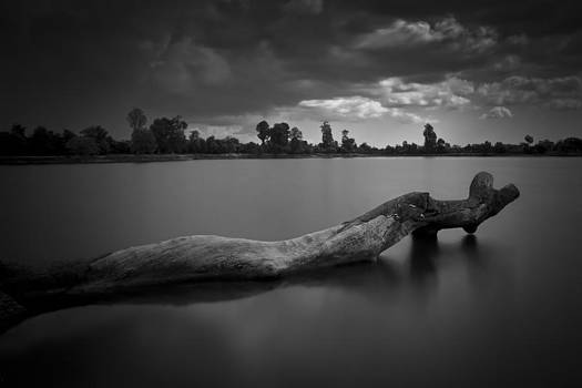 Tree in water by Thomas Pfeller