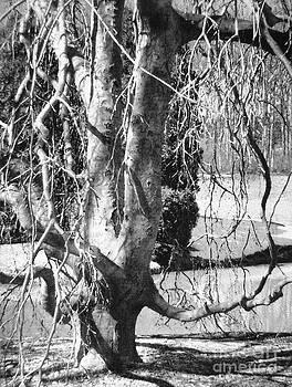 Tree by Iris Posner