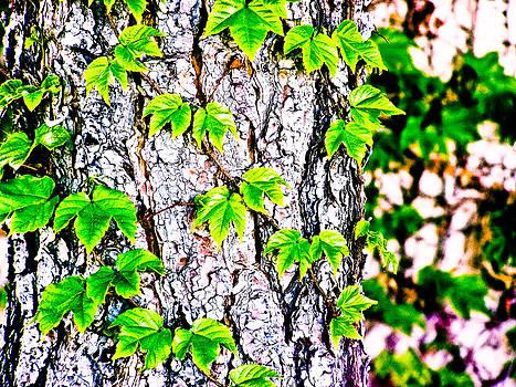 Tree Ivy by  Garwerks  Photography