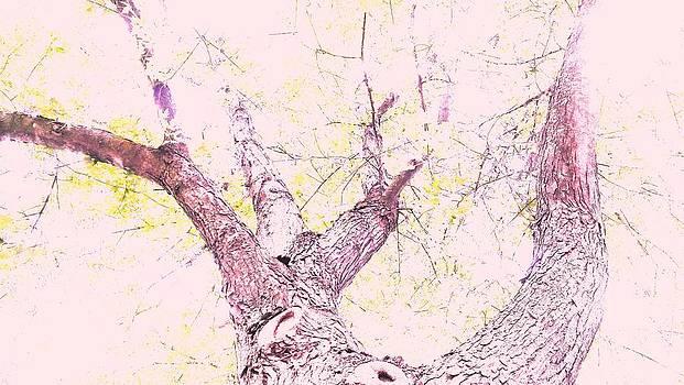Tree by Jennifer Fliegel
