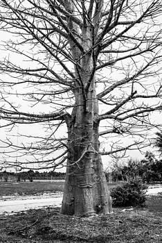 Tree by Jose Mena
