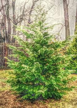 Tree by Julia Otulak