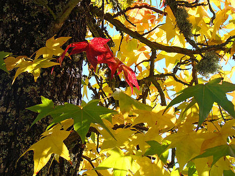 Baslee Troutman - Tree Leaves Art Prints Yellow Green Red Autumn