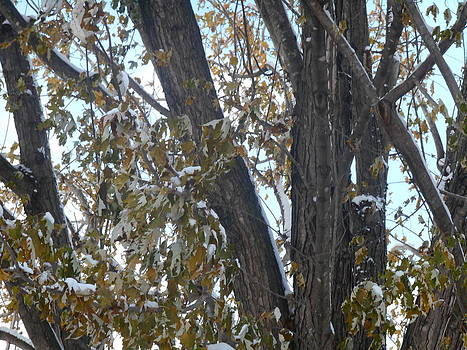 Tree Leaves with Snow by Shea Holliman