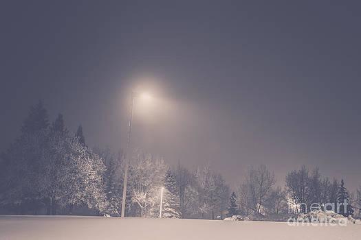 Alanna DPhoto - Soft Winter Light