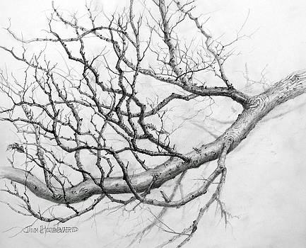 Jim Hubbard - Tree limb study #11
