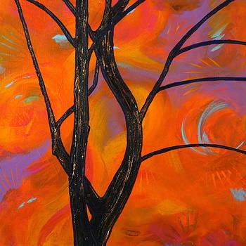 Tree Limbs at Sunset by Julianne Hunter
