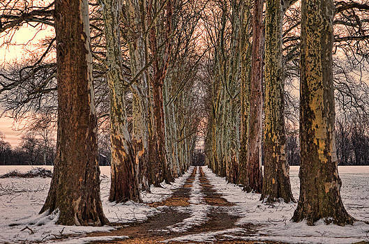 Tree Lined Lane by Donna Harding