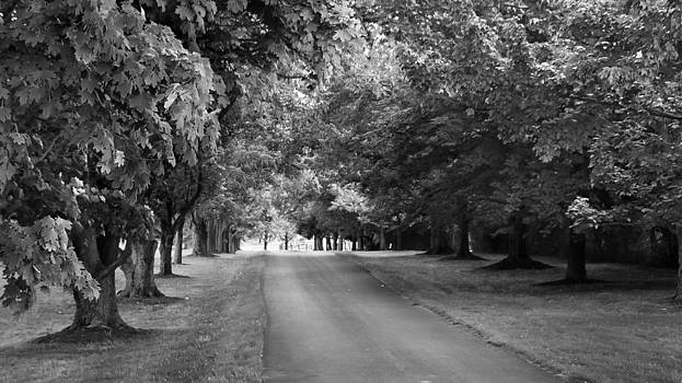 Tree Lined Lane by Guy Whiteley