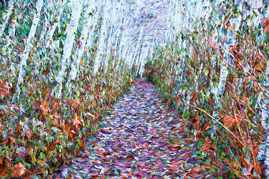 Peggy Collins - Tree Lined Path in Autumn