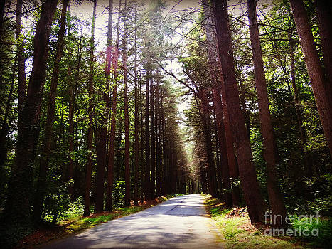 Tree Lined Road by Crystal Joy Photography