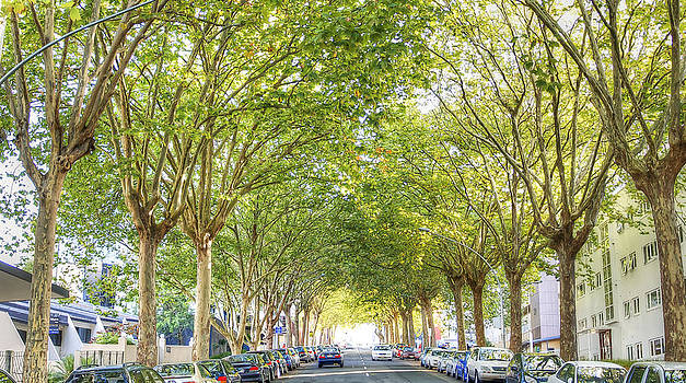 Tree-Lined Street by Dave McGregor