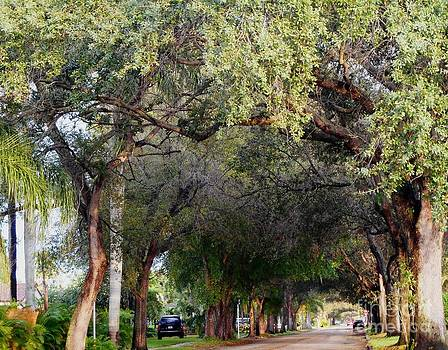 Tree Lined Street in Florida by Debb Starr