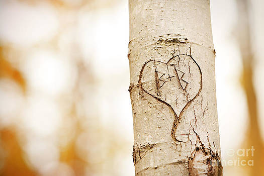 Tree Love Carving by Sharon Dominick