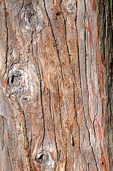 Fizzy Image - tree