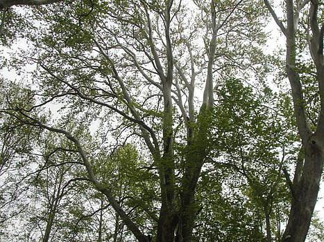 Tree by Makarand Kapare