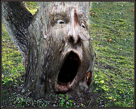 Tree Man by Gene Tatroe