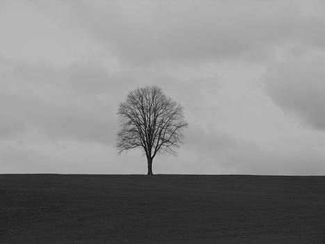 Tree by Mark C Ettinger