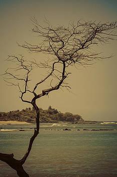 Tree of Anaehoomalu Bay by Rod Sterling