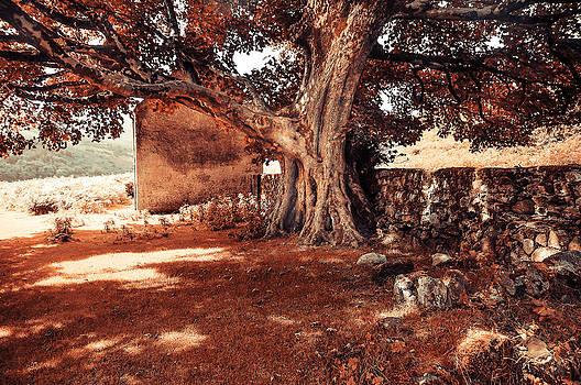Jenny Rainbow - Tree of Genus. Wicklow. Ireland