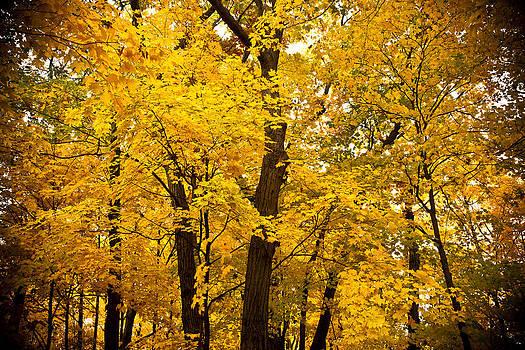 Kamil Swiatek - Tree of Gold