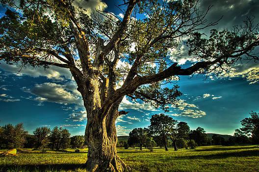 Tree of Life by Helene Kobelnyk