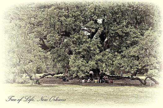 Kathleen K Parker - Tree of Life in New Orleans