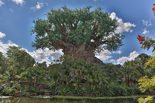Jimmy McDonald - Tree of Life
