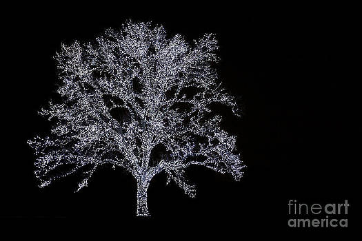 Tree of Light by David Lee