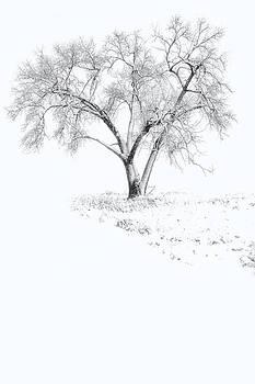 Tree of Seasons by Ray Still