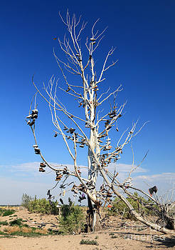 Tree of Shoes by Pattie Calfy