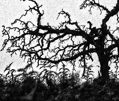 Joe Bledsoe - Tree of Sorrow
