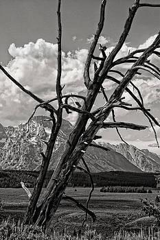 Tree of Teton by Alina Marin-Bliach