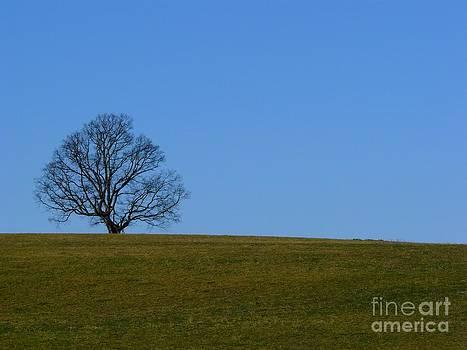 Christine Stack - Tree on a Hill II