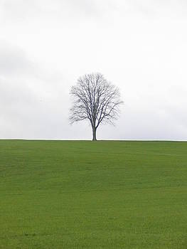 Tree on a hill by Mark C Ettinger