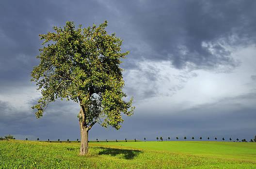 Tree on green grass - dramatic dark sky by Matthias Hauser
